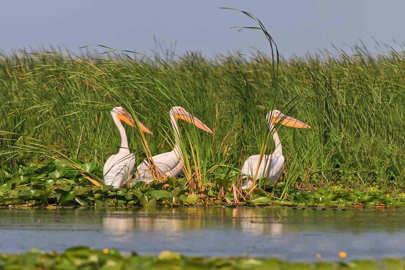 Birdwatching in Delta Dunarii 2021