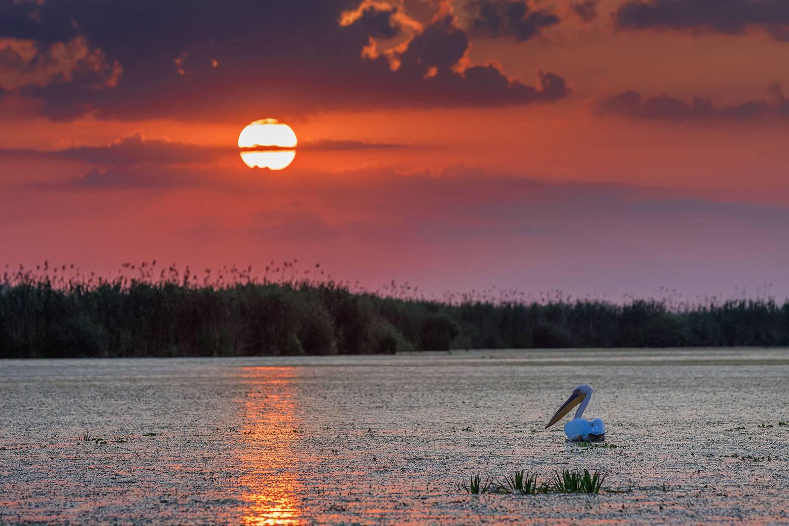 Oferta de Rusalii 2021 la Pensiunea Paradise Delta House – Delta Dunarii