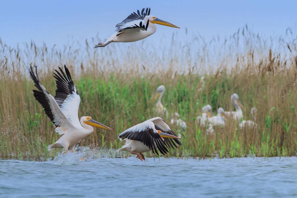 Oferta ture foto - birdwatching Delta Dunarii 2021 (Paradisul Pasarilor)