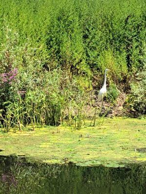 Oferta Pescuit in Delta Dunarii 2021